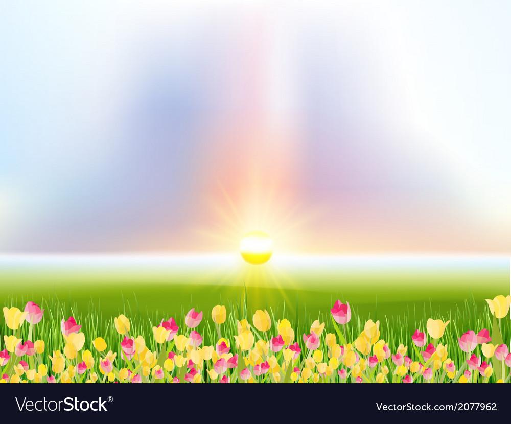 Spring flowers tulips in the sunlight eps 10 vector