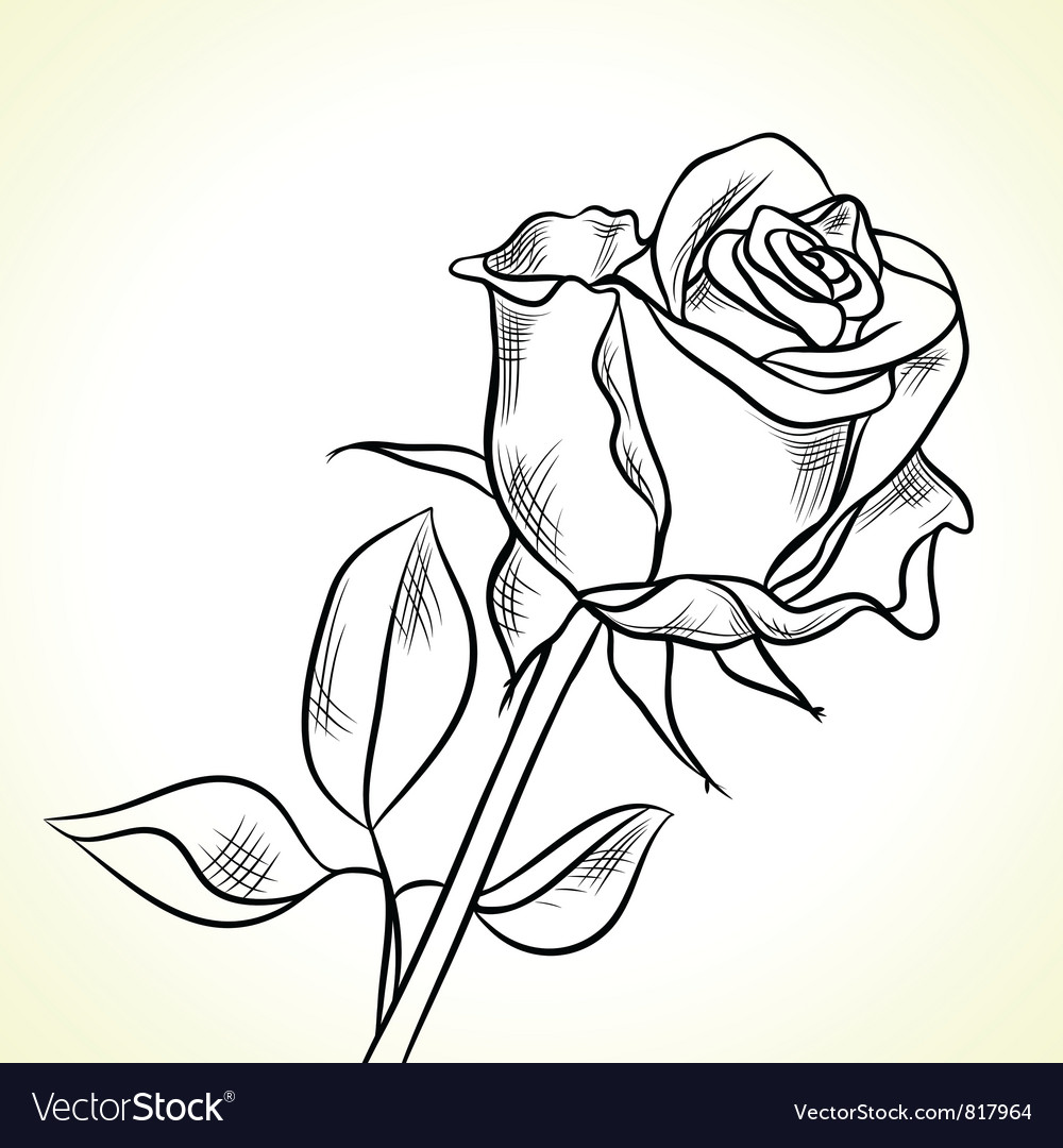Silhouette of the black rose vector