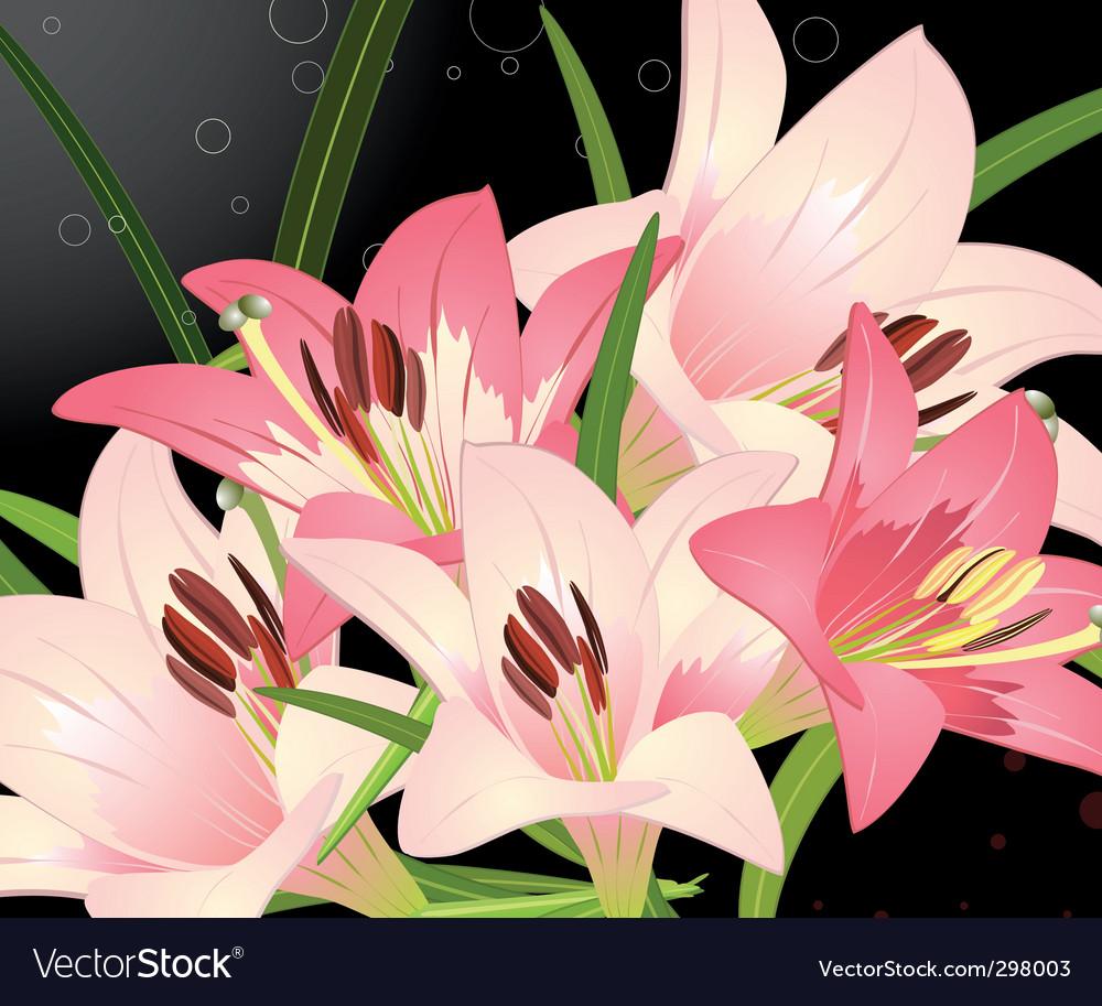 Royal lily vector