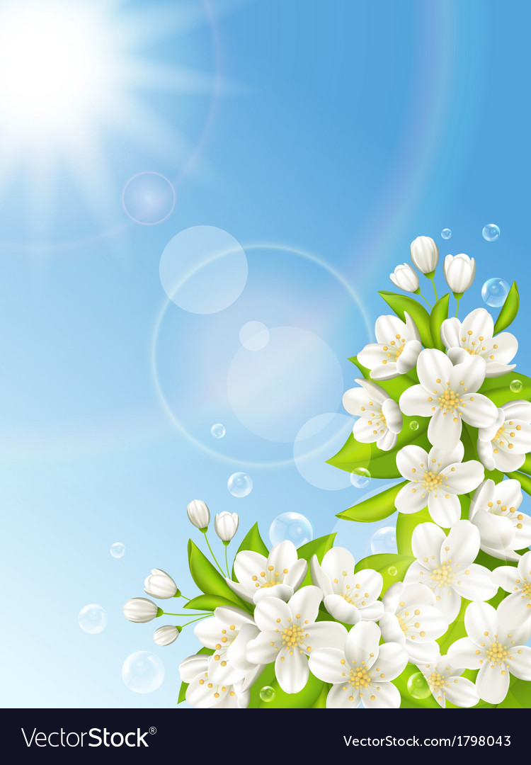Flowering cherry on the background of blue sky vector