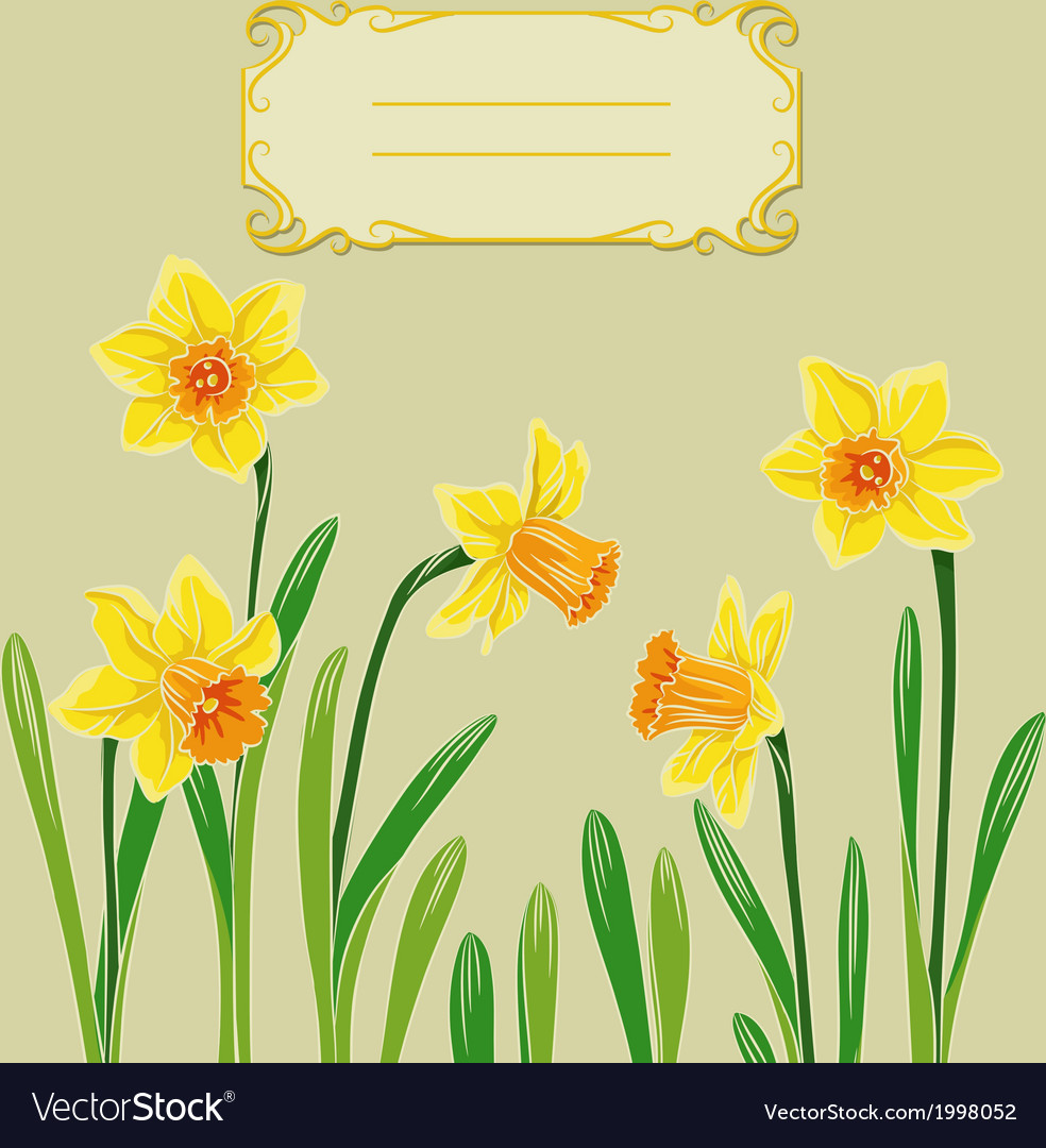 Card with easter daffodil in center and frame vector