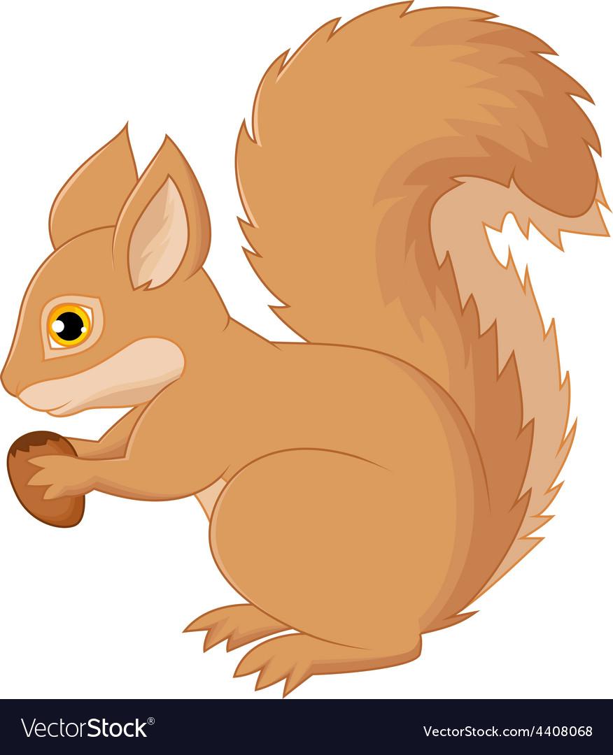 Squirrel cartoon holding nut vector