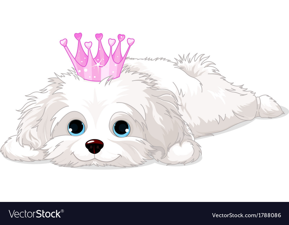 Havanese puppy with crown vector