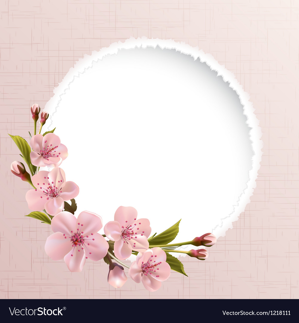 Spring background with pink cherry flowers vector