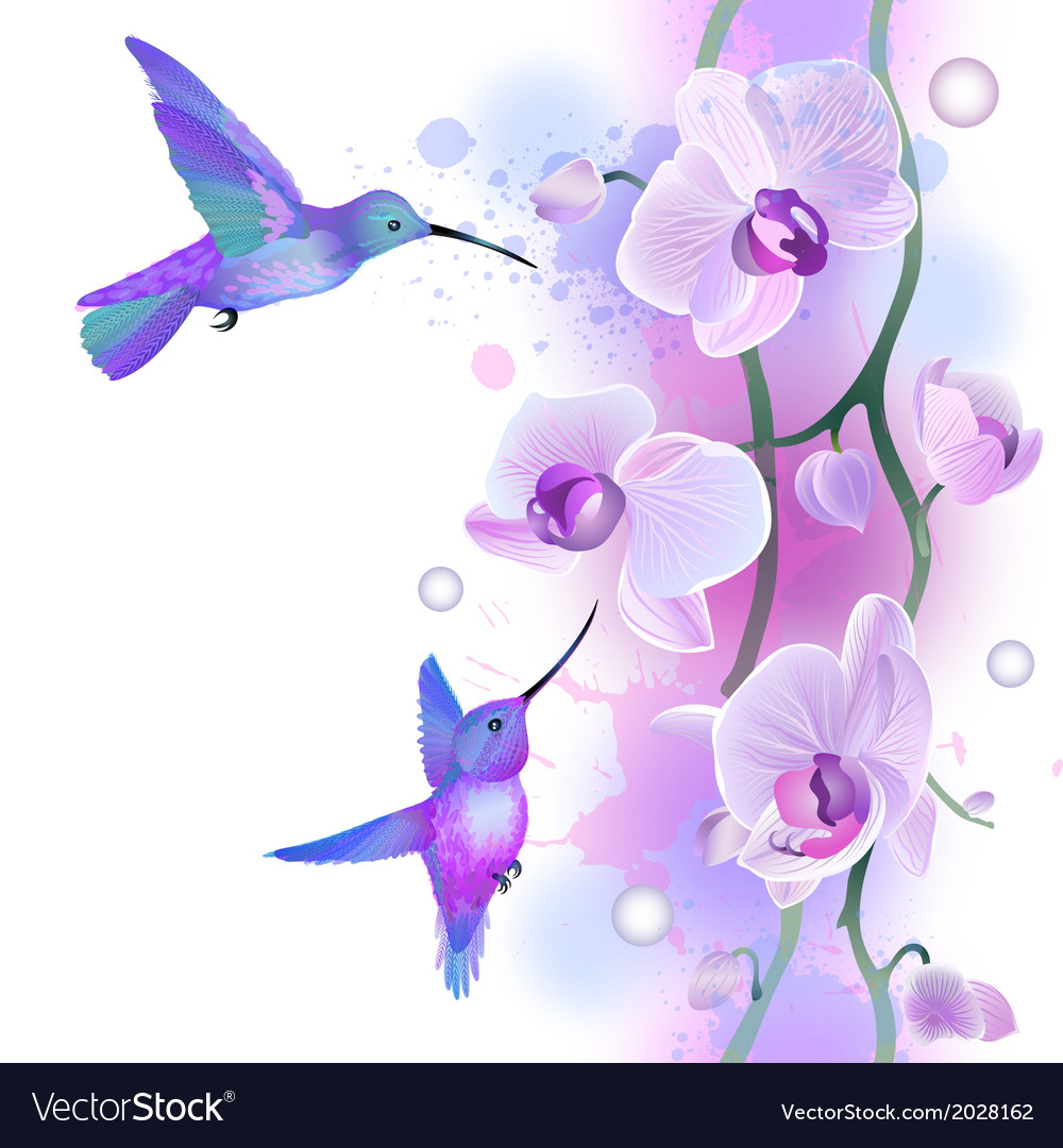 Seamless ornament with orchids and humming birds vector