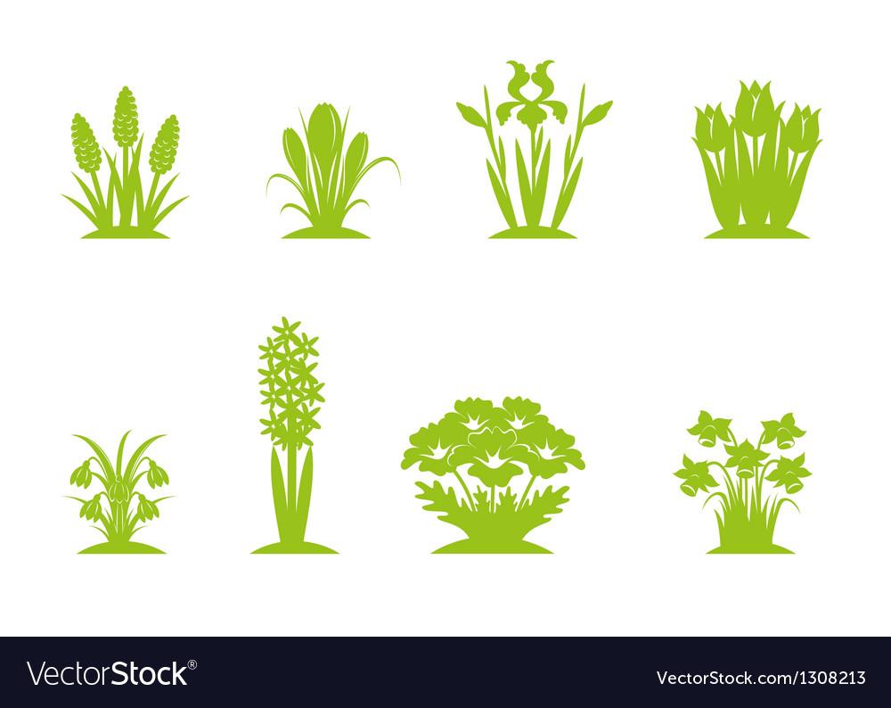 Flowers green vector