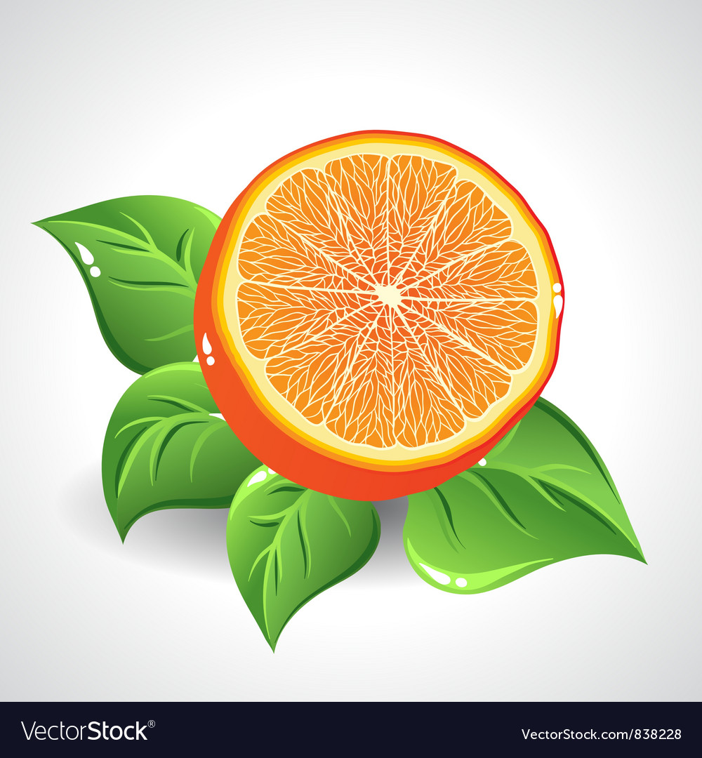 Yummy orange on white background with green leaves vector