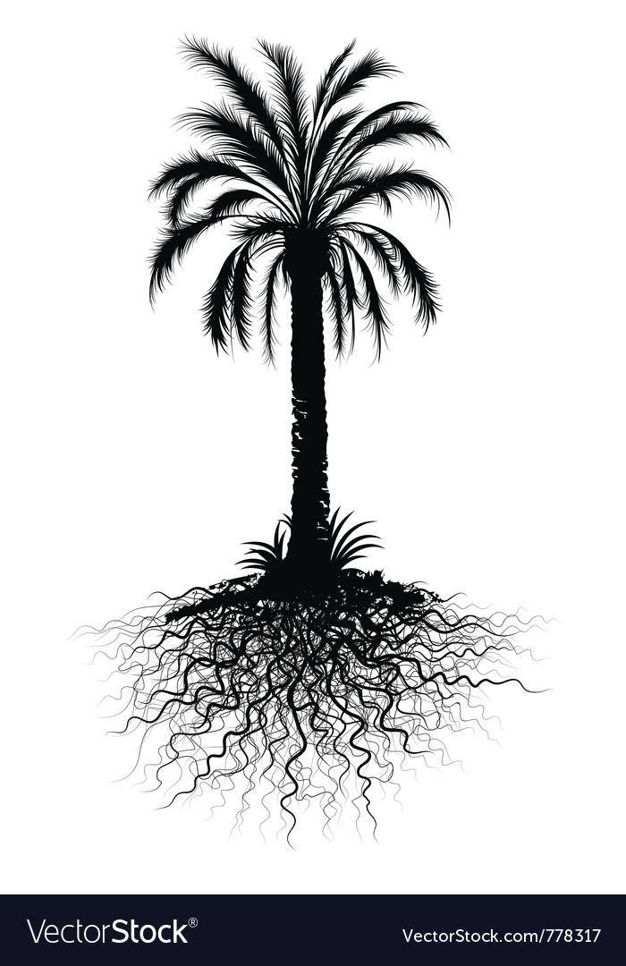 Palm tree sketch vector