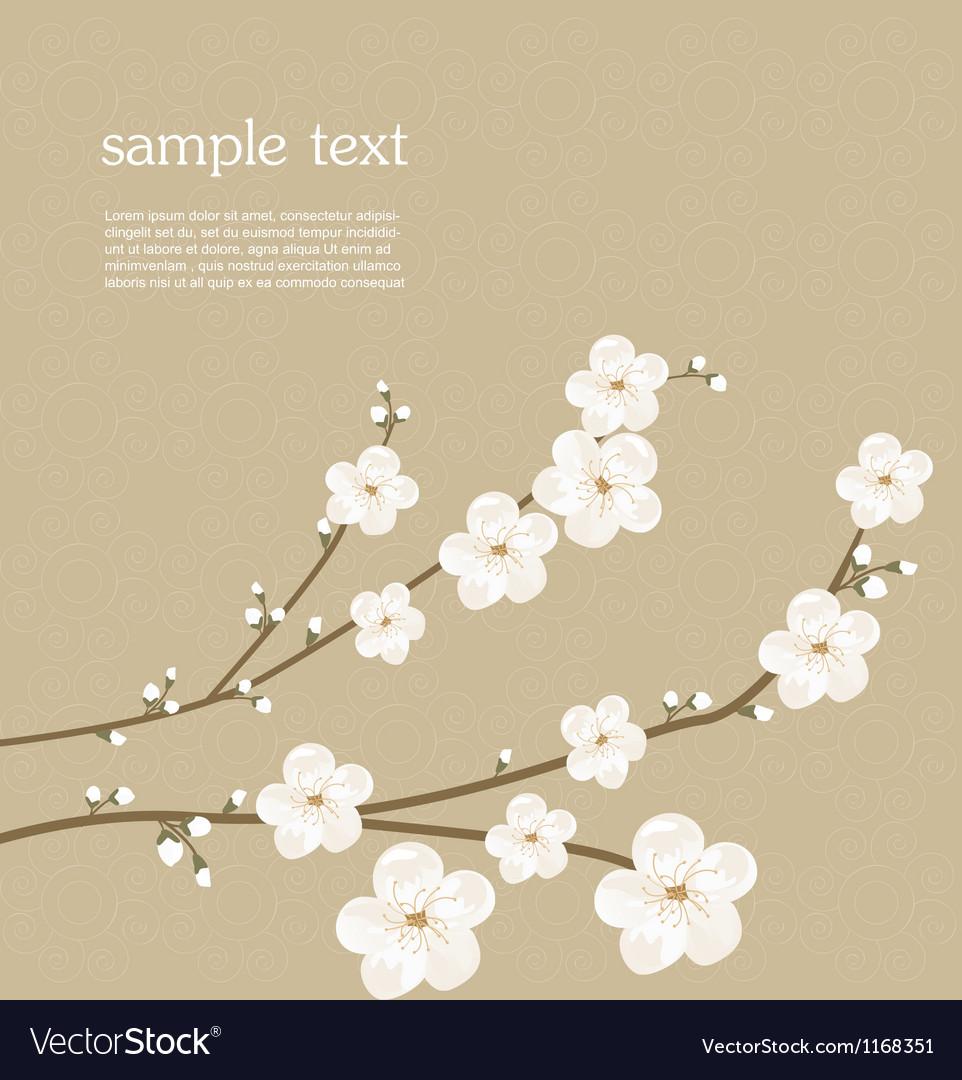 Cherry blossom card vector