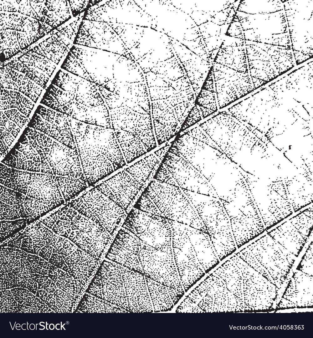 Overlay texture leaf vector