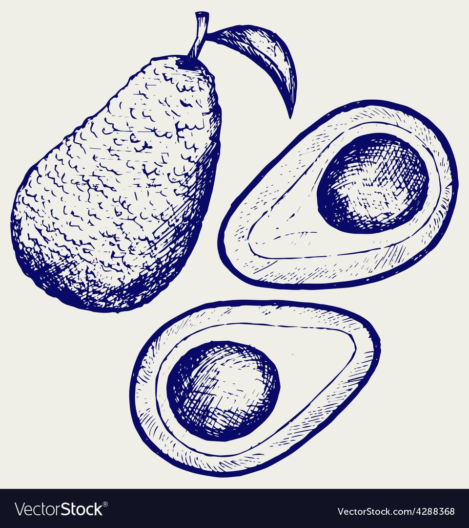 Fresh avocado fruit vector