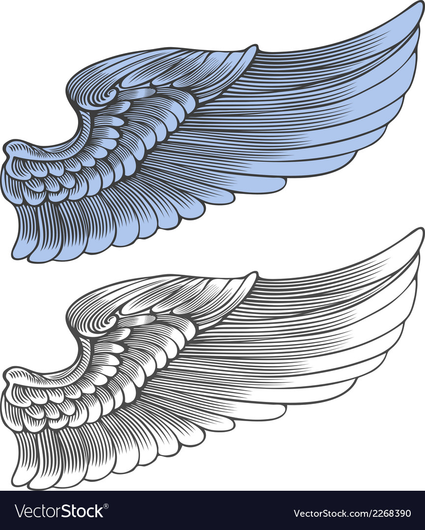 Wing in engraving style vector