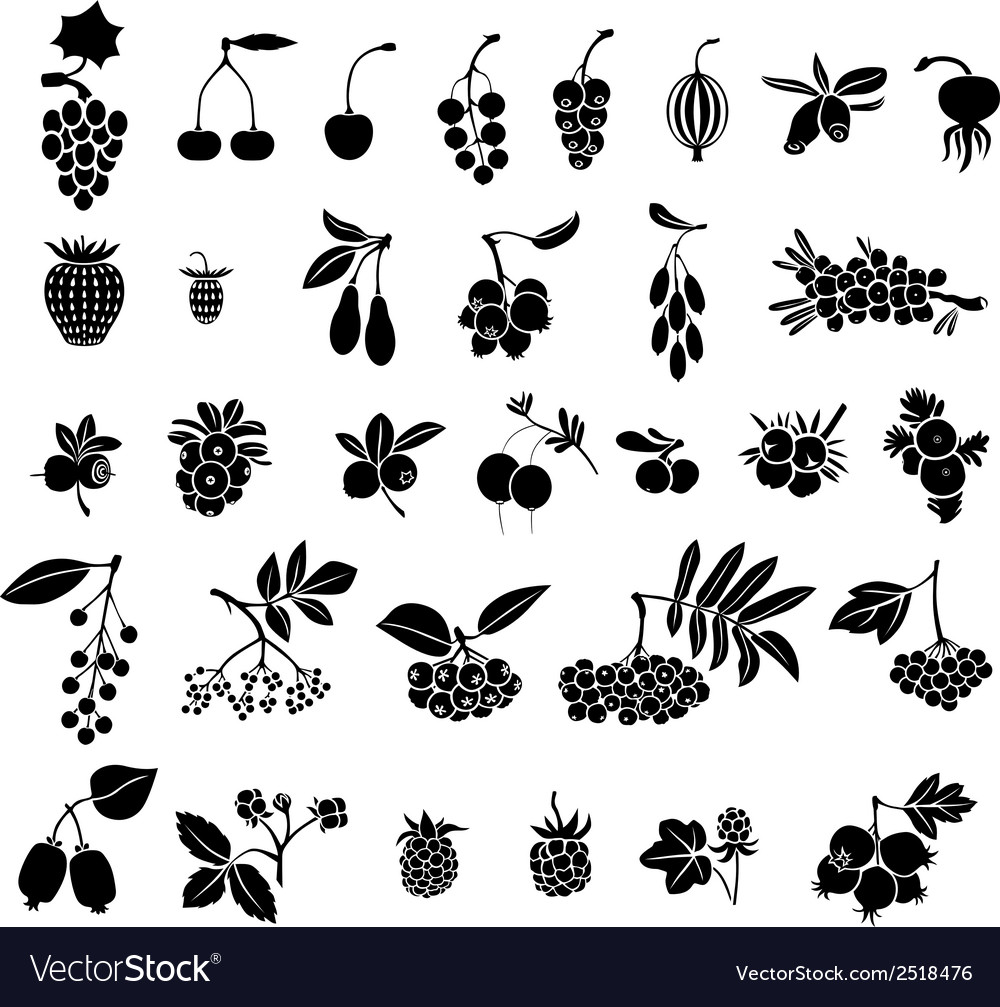 Berries set vector