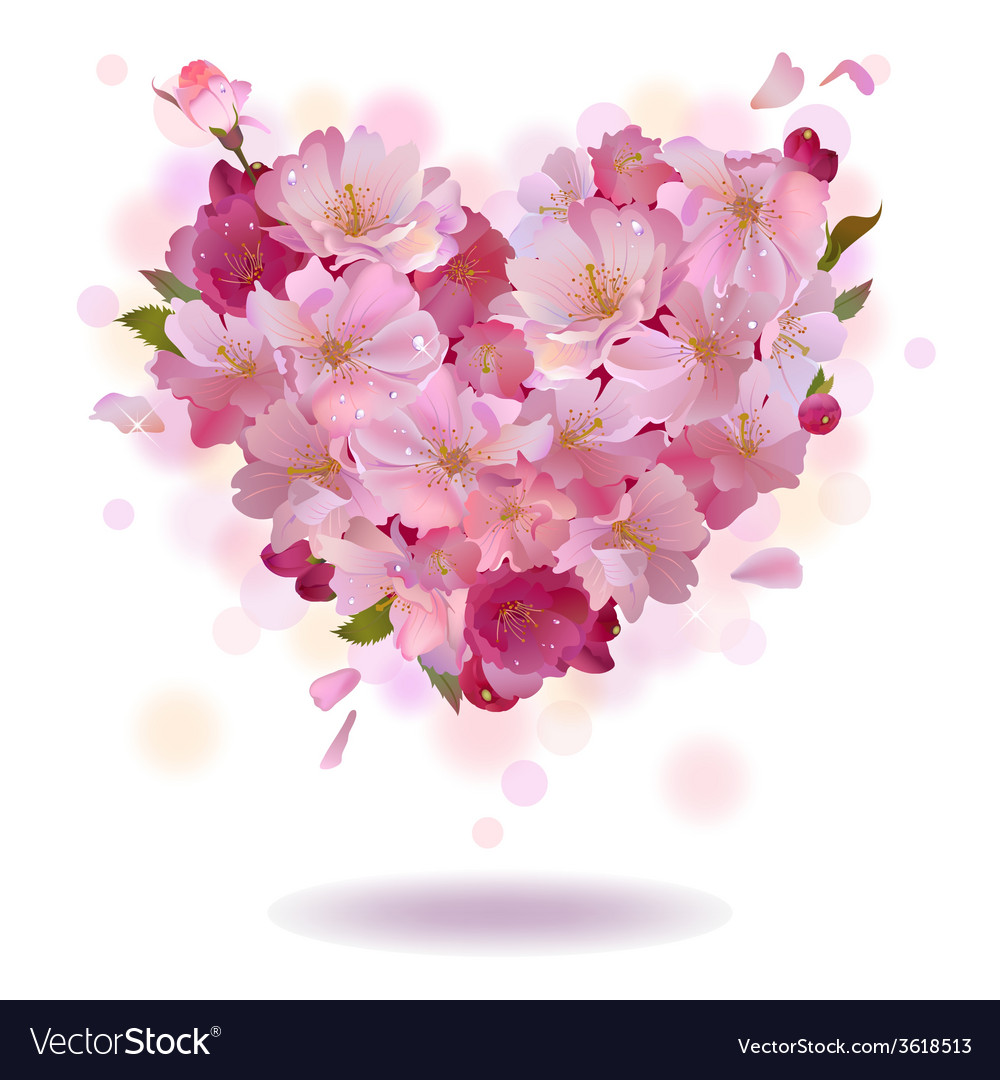 Cherry petal heart isolated on the white vector
