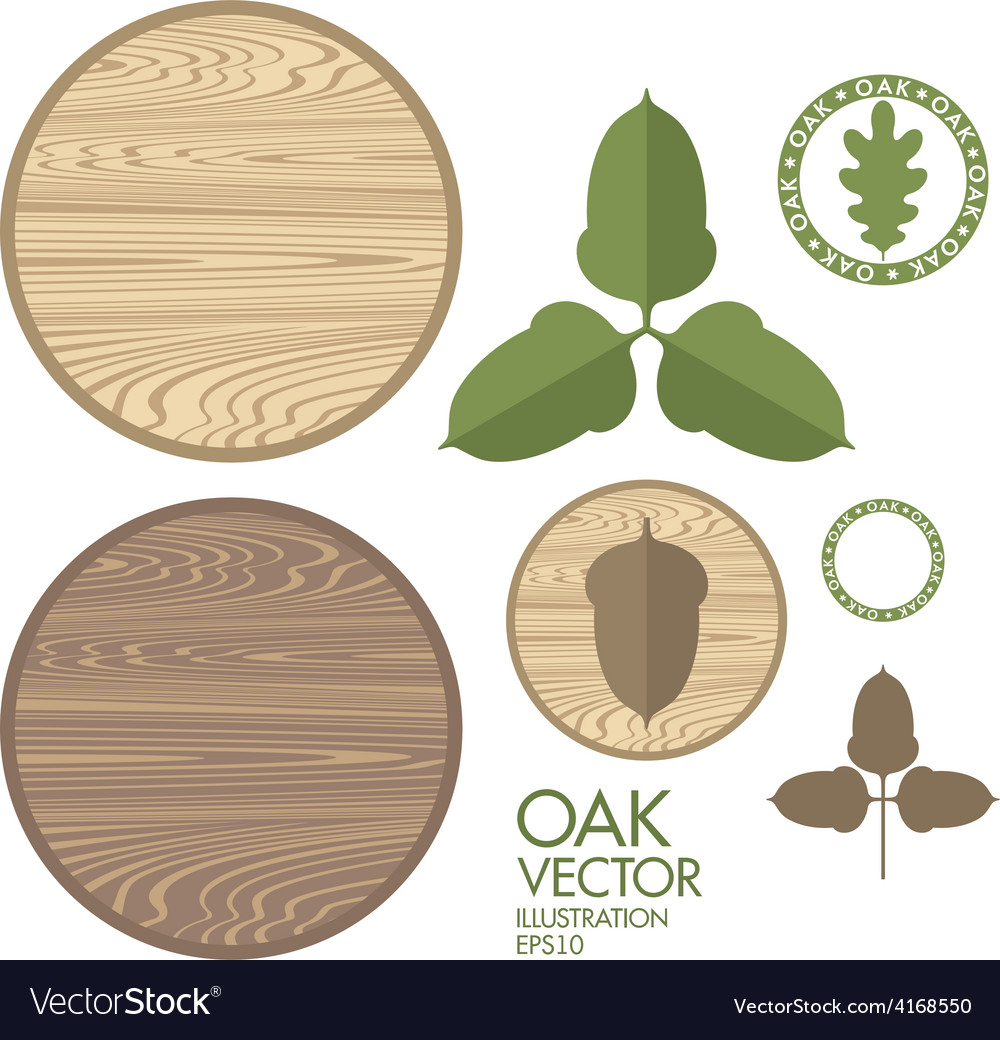 Oak acorn wood vector