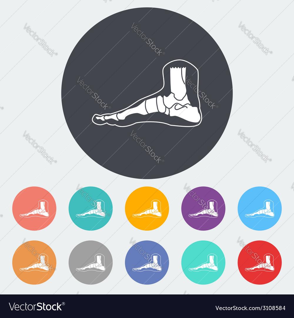 Foot anatomy icon vector
