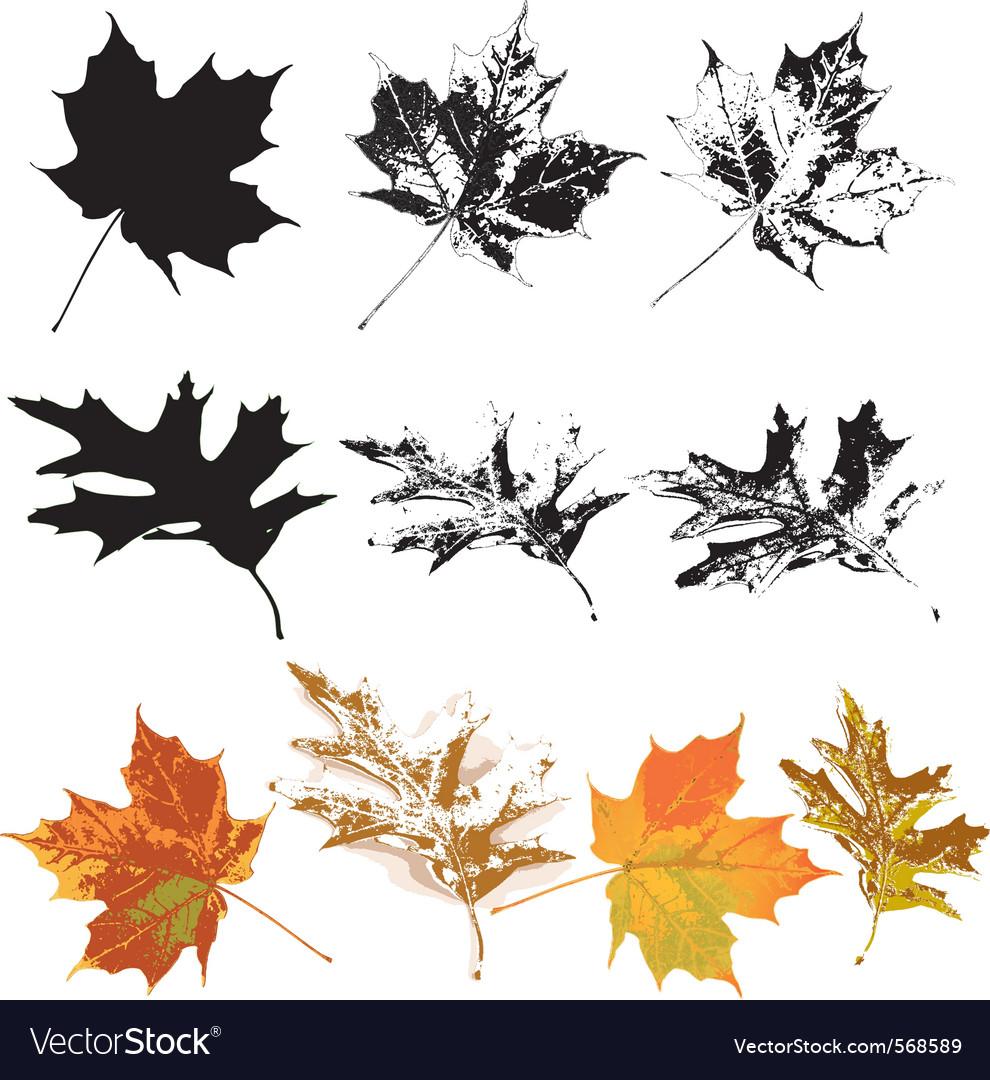 Set of grunge leaves vector
