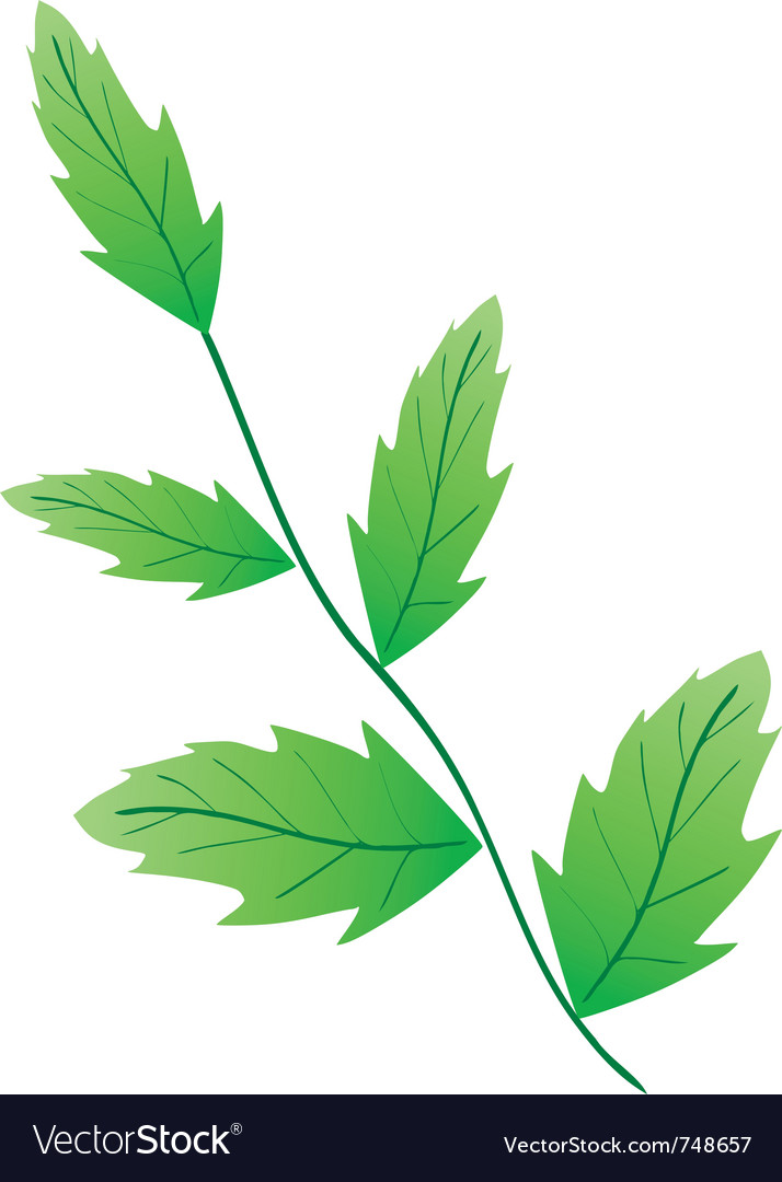 Decorative leaf vector