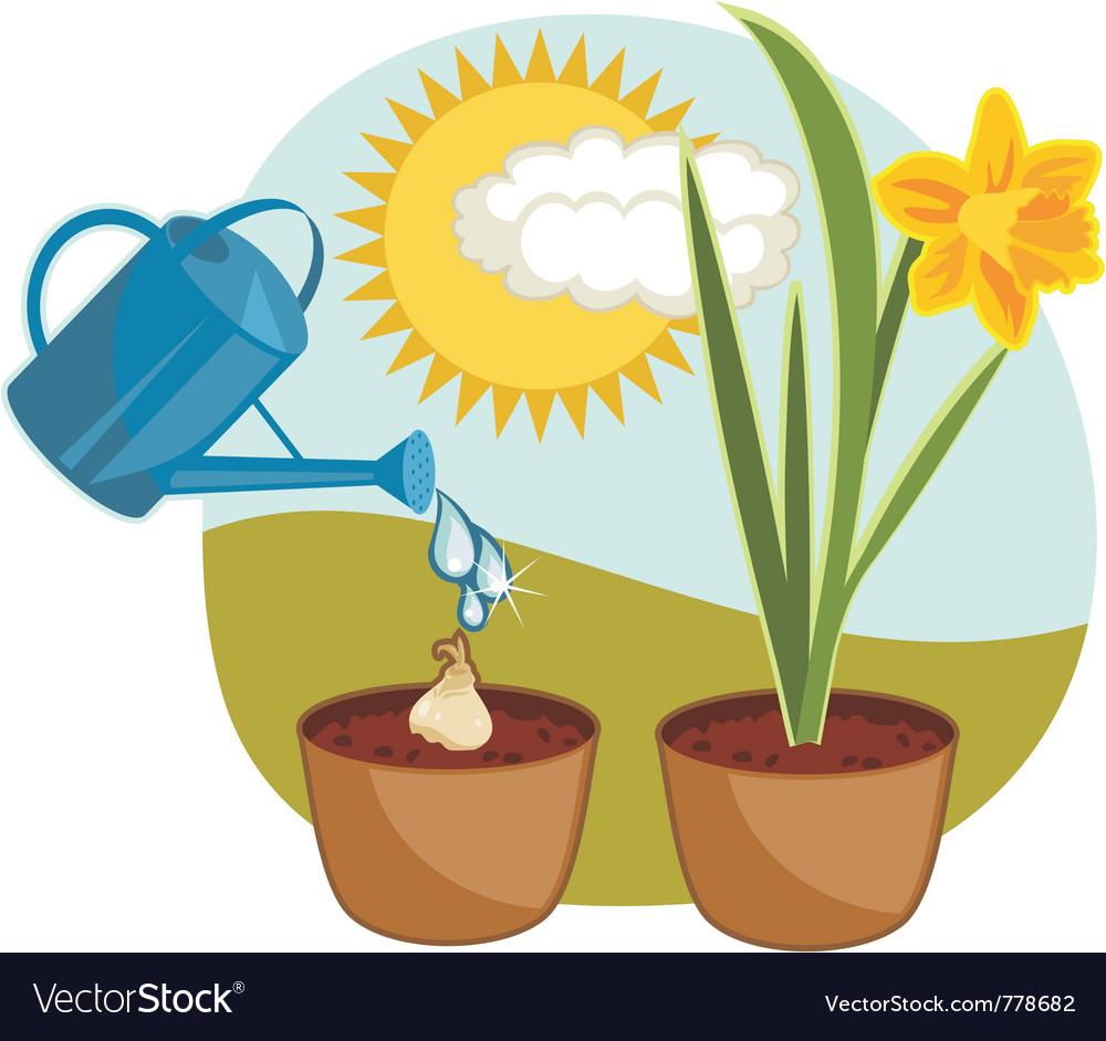 Growing daffodil vector