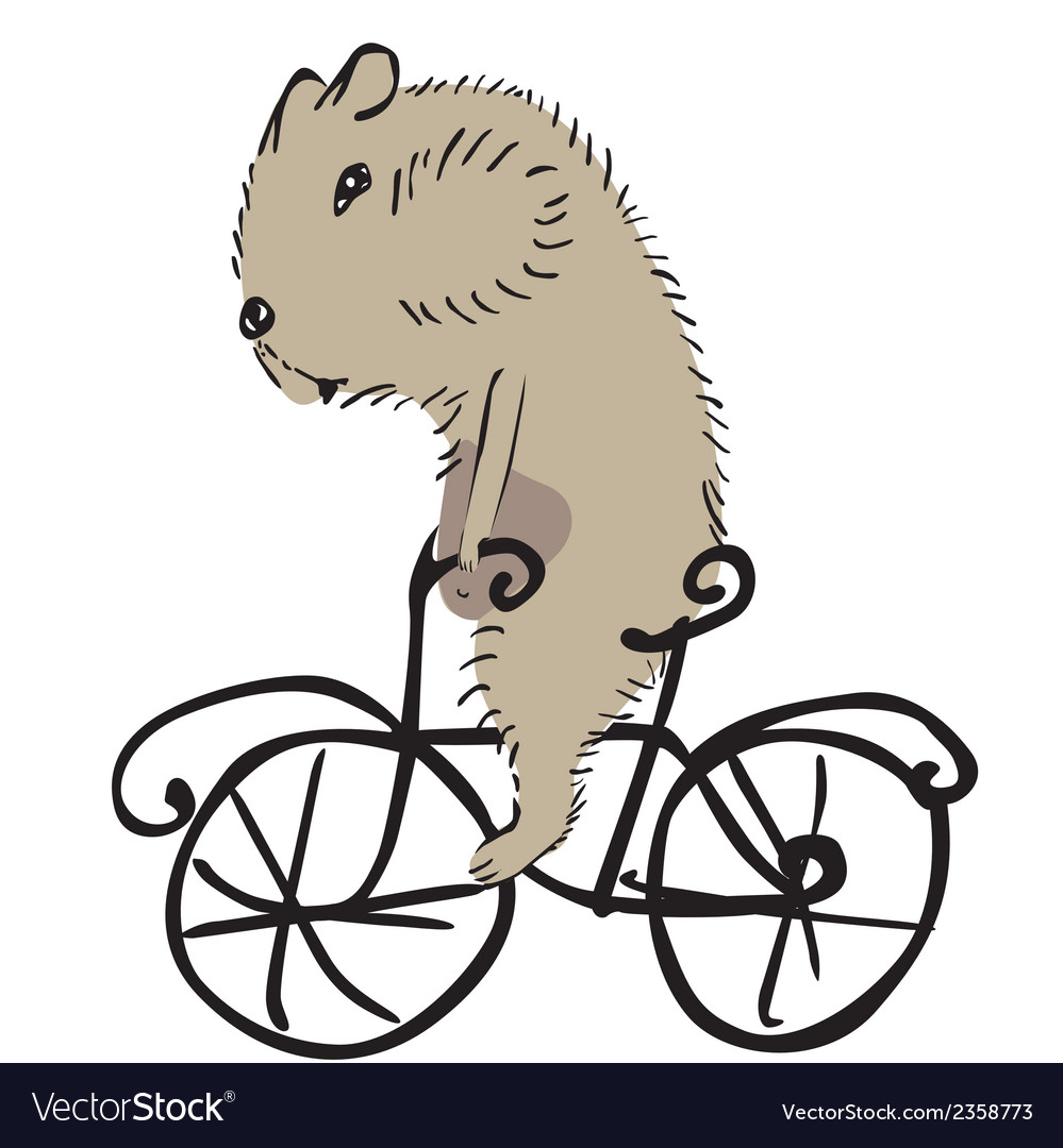 Hamster on a bike vector