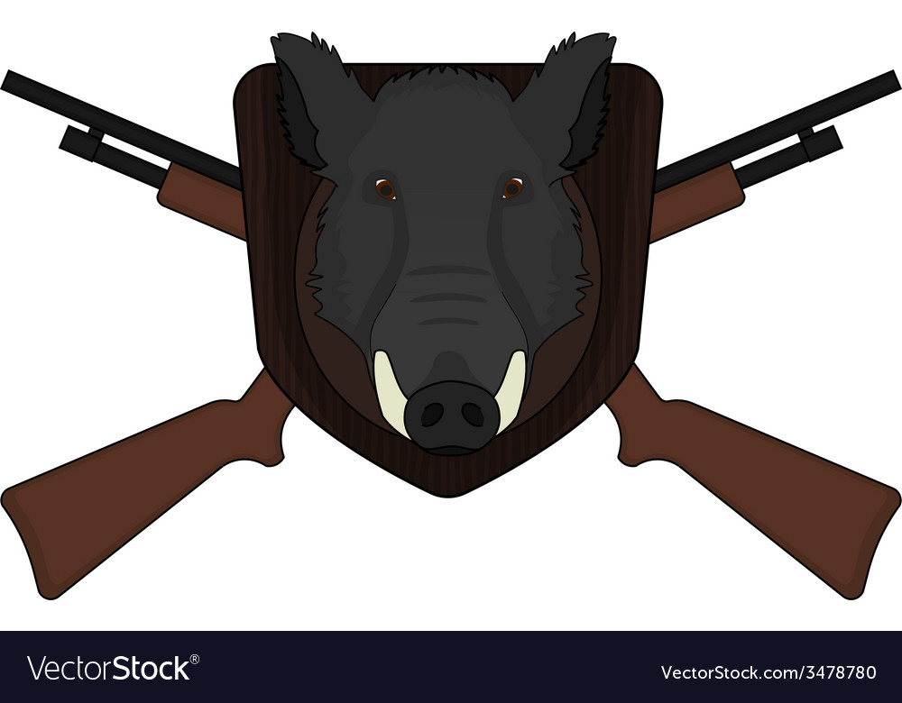 Hunting trophy stuffed wild boar head vector