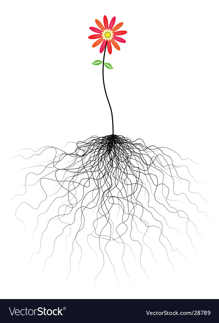 Flower and roots vector