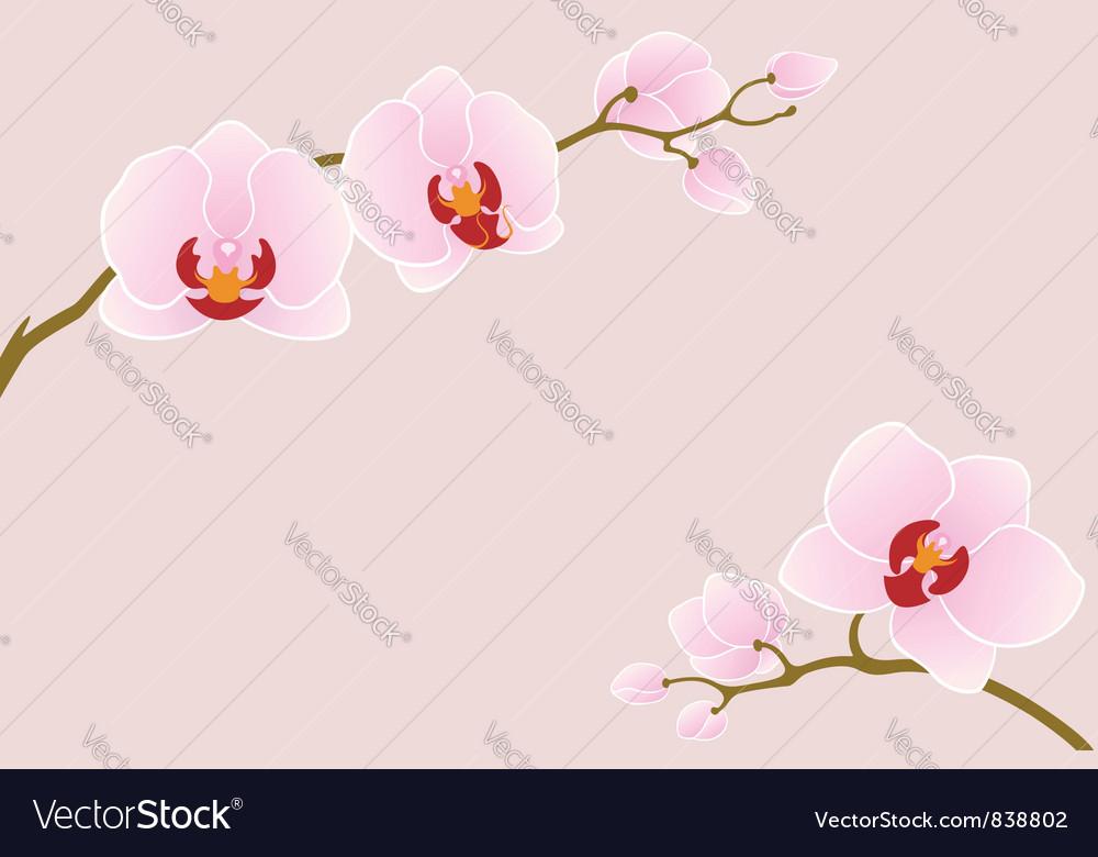 Tender orchid vector
