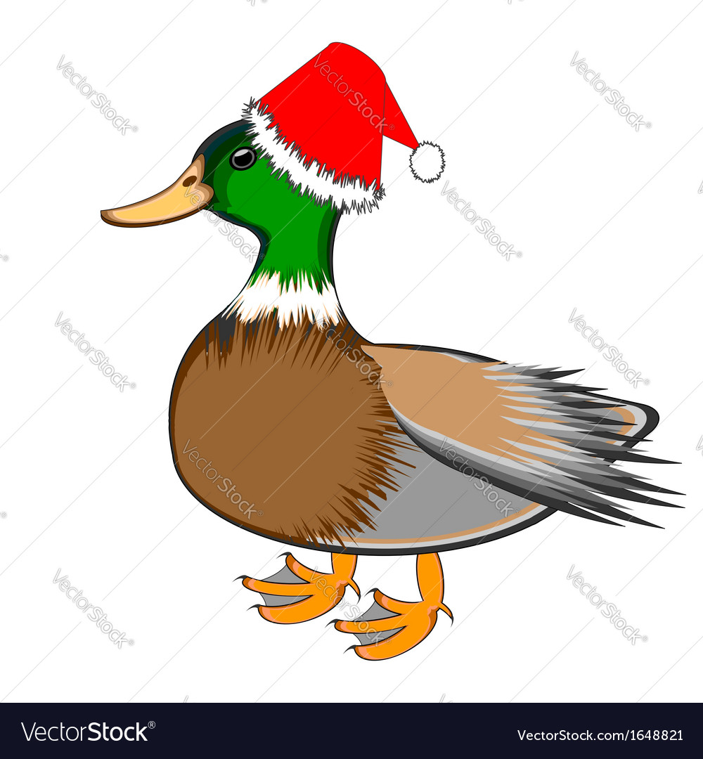 A christmas duck isolated on a white backgrou vector