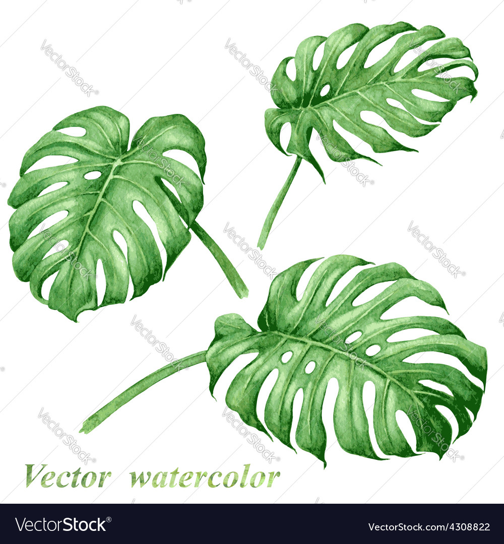 Tropical leaves set vector