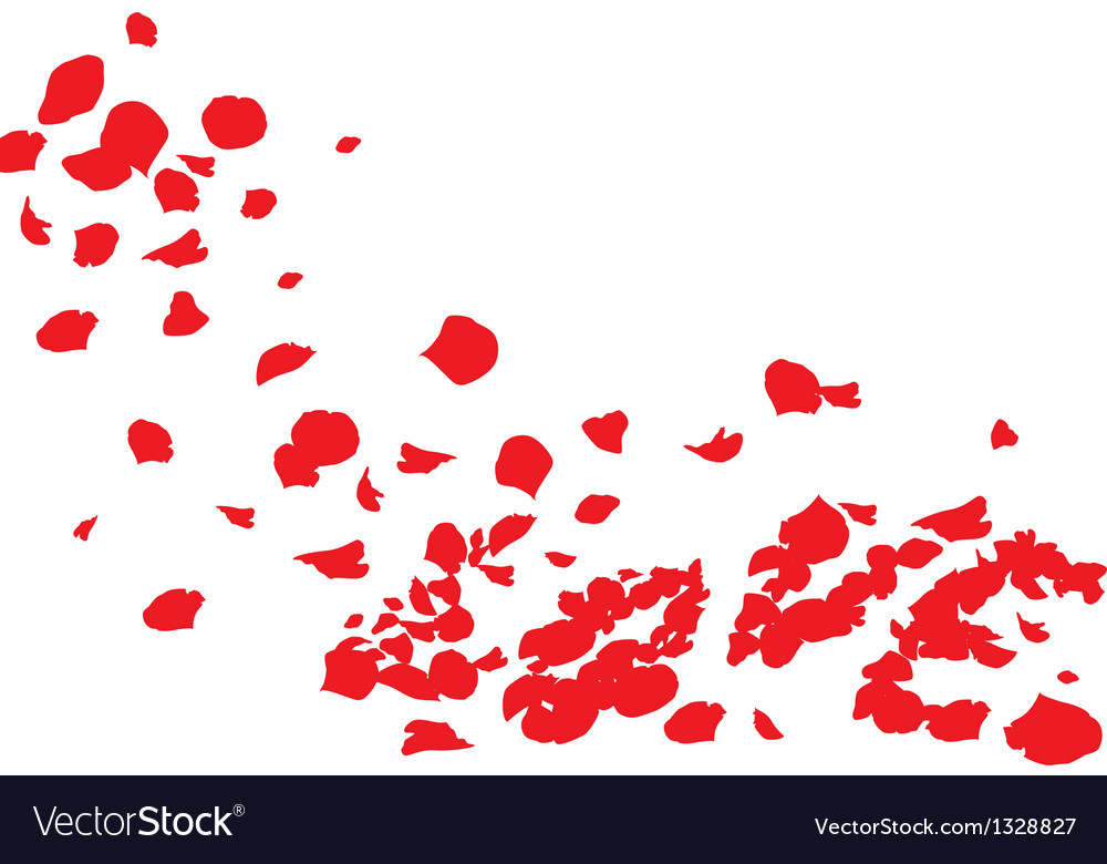Rose of love vector