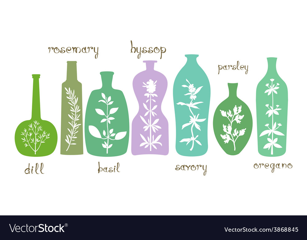 Aromatic herbs essentials vector