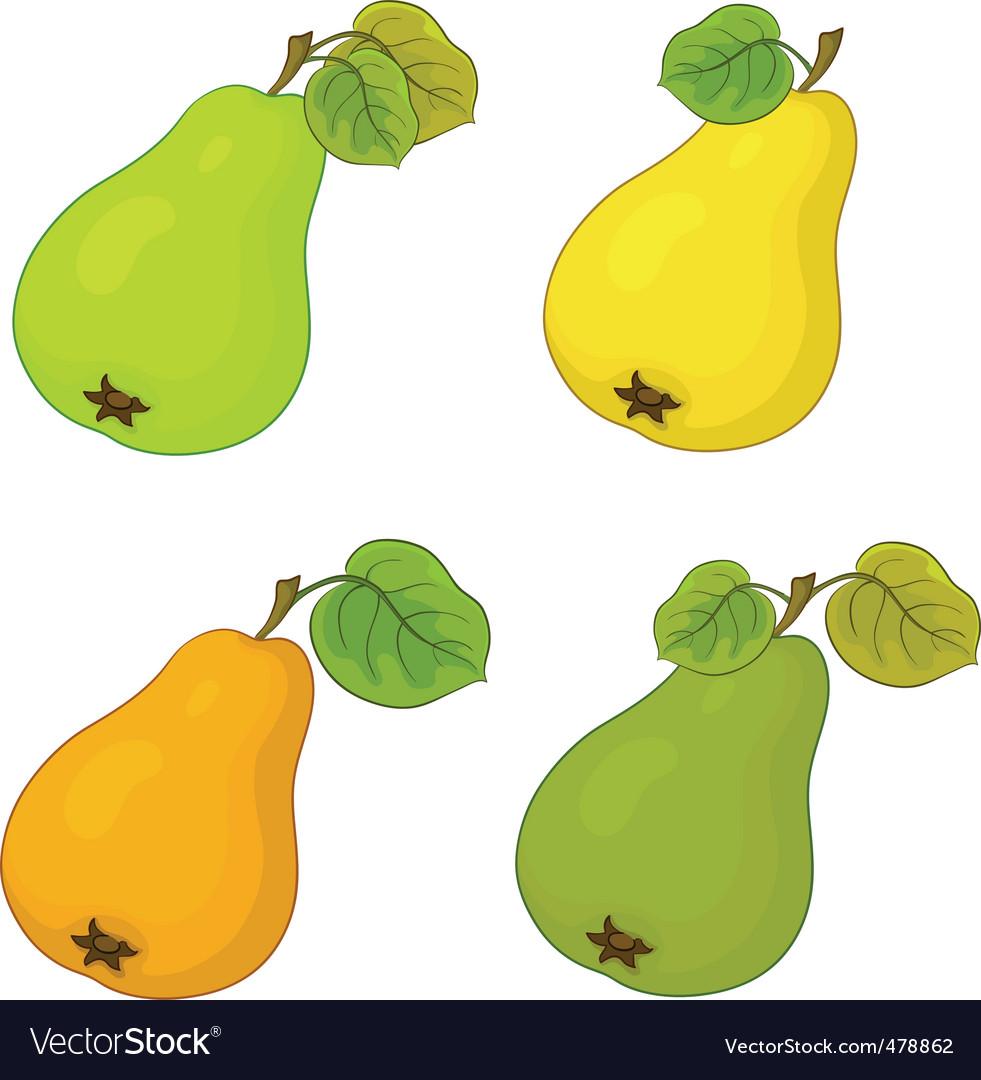 Fruit pears vector