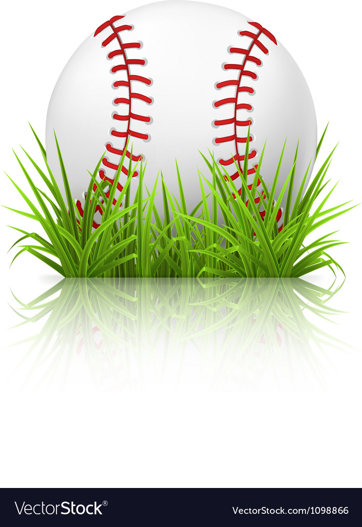 Baseball on grass vector