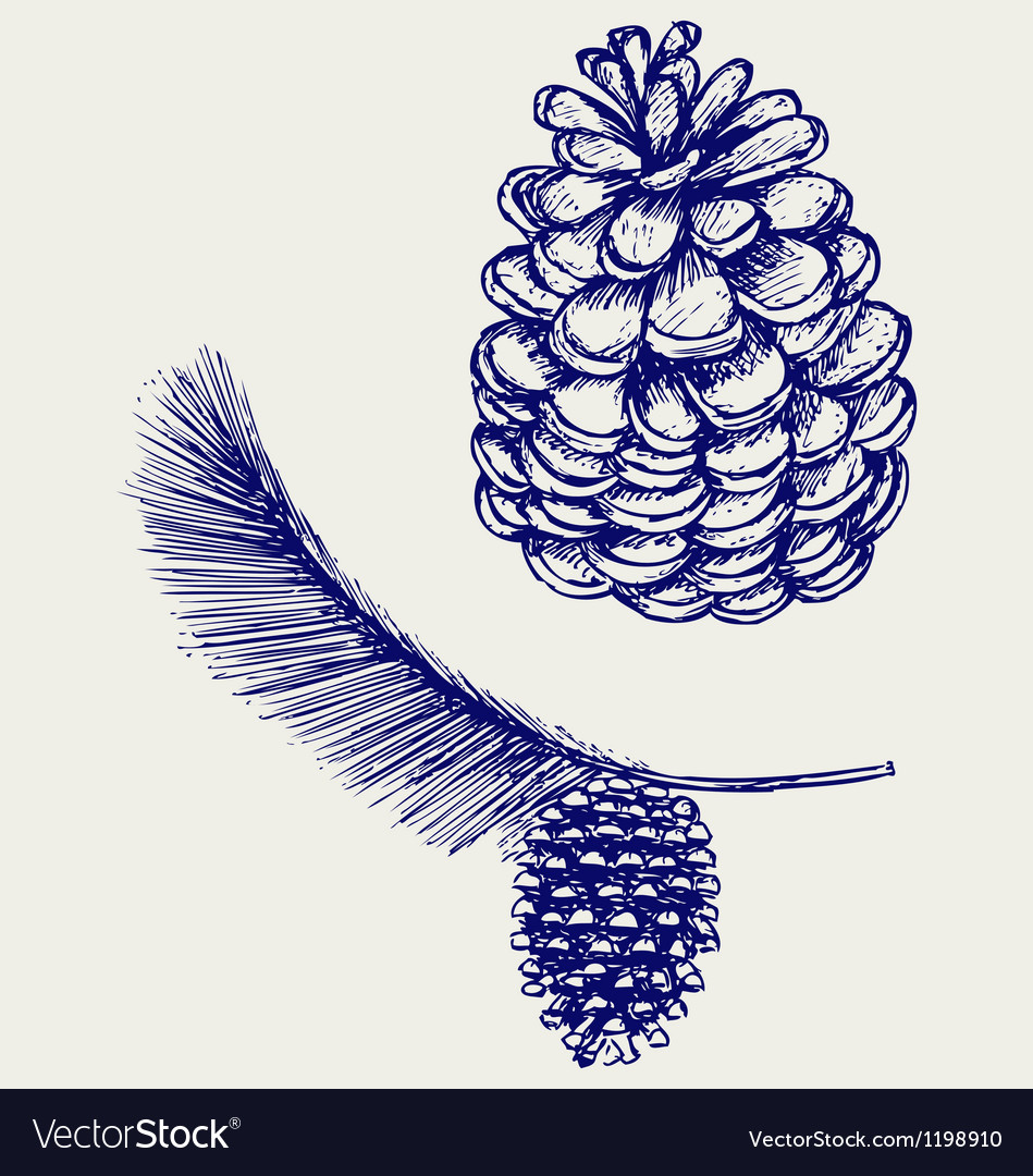 Pine branch with cones vector