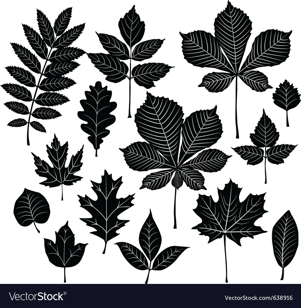 Set of silhouette leaf vector