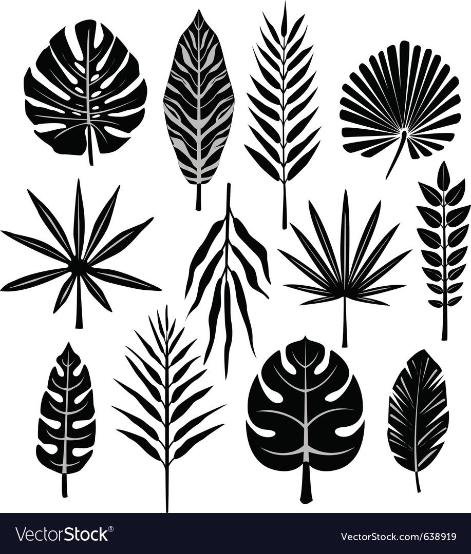 Tropical leaf vector