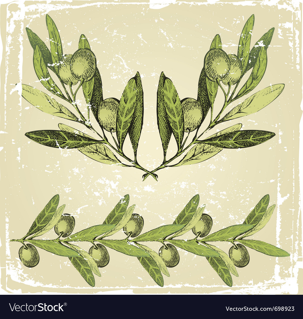 Hand drawn olive branches ornament vector