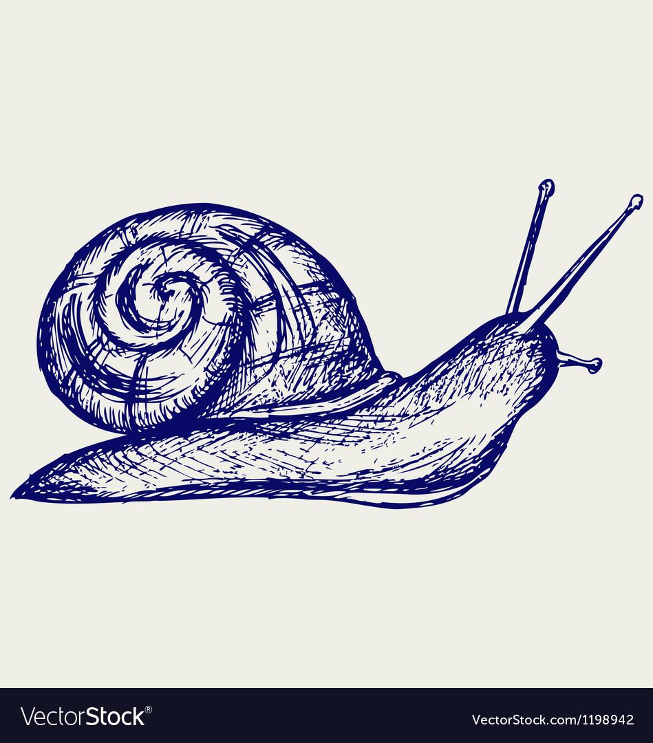 Garden snail vector