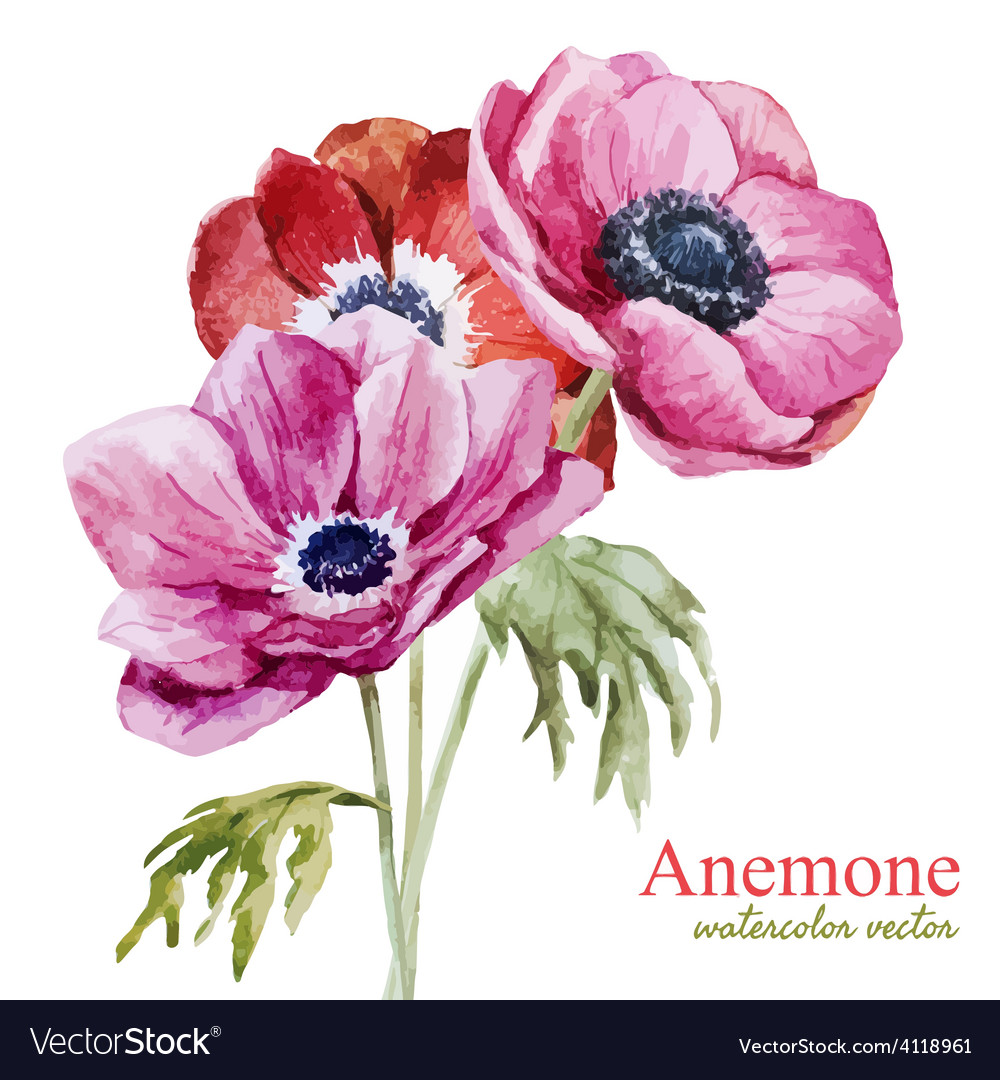 Anemones vector