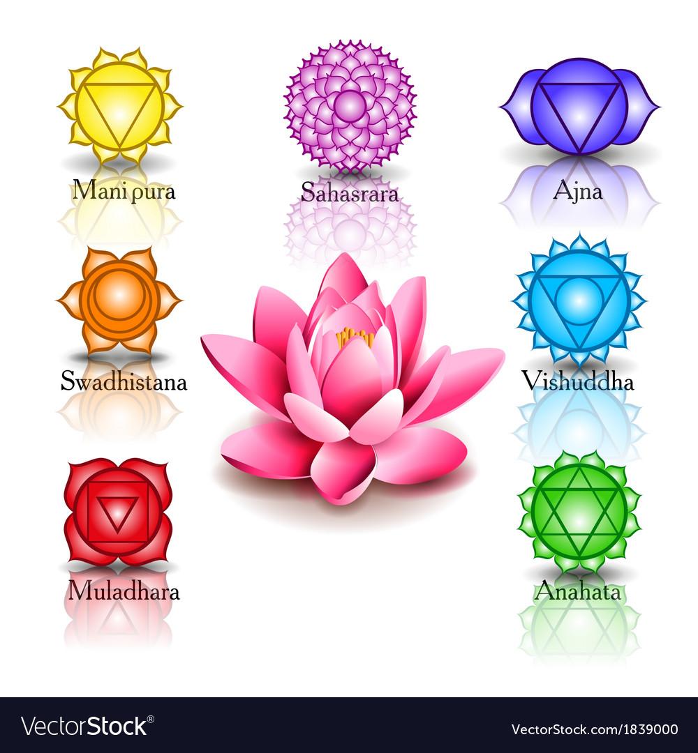 Lotus and seven chakras vector