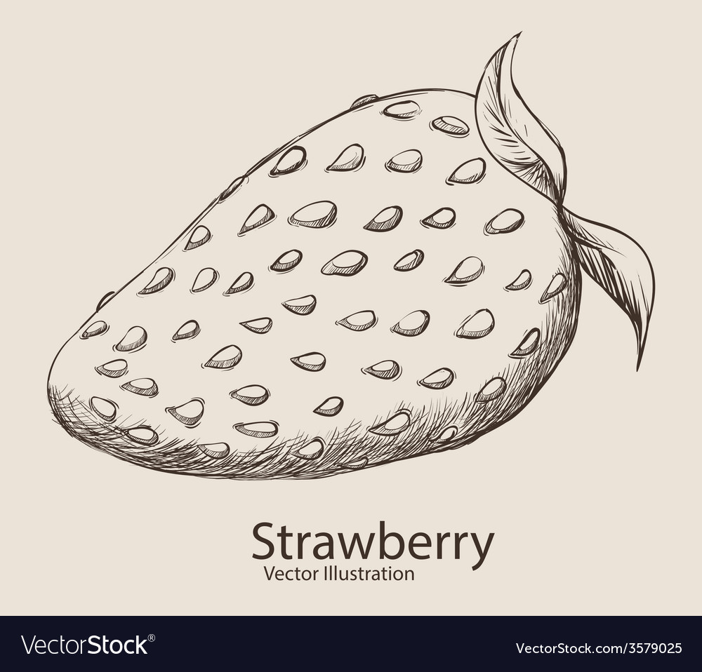 Fruit drawn design vector