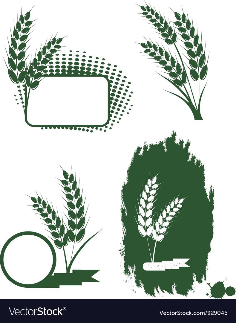 Green ears of wheat vector