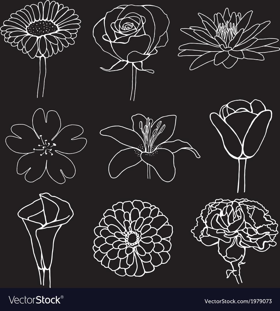 Flower sketch design vector