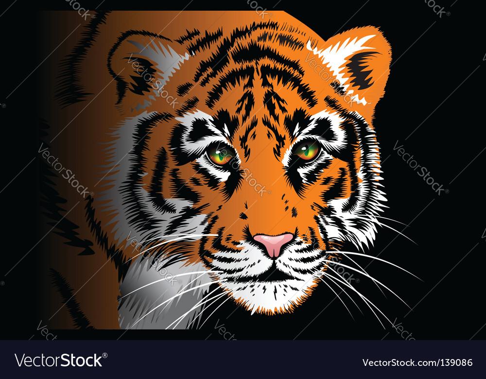 Tiger on black background vector