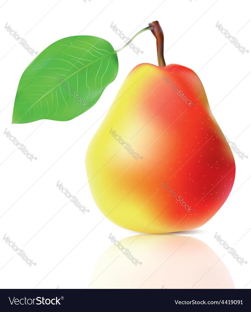 Realistic ripe pear vector