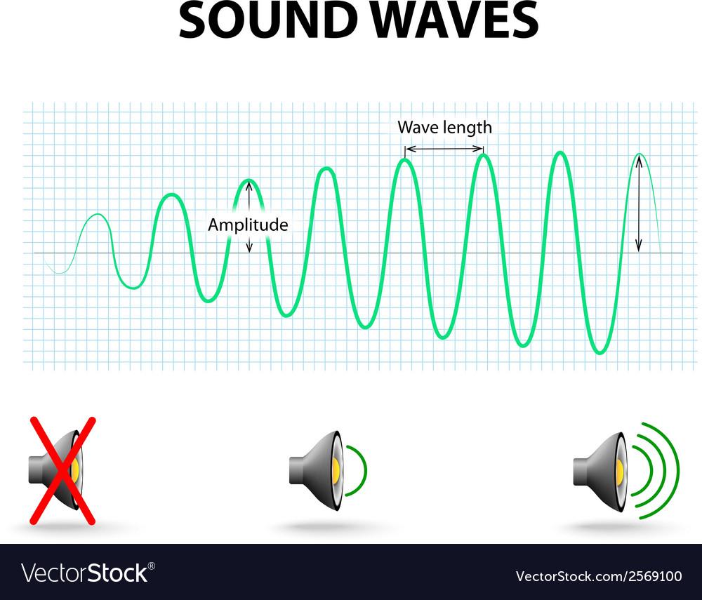 Amplitude of a sound wave vector