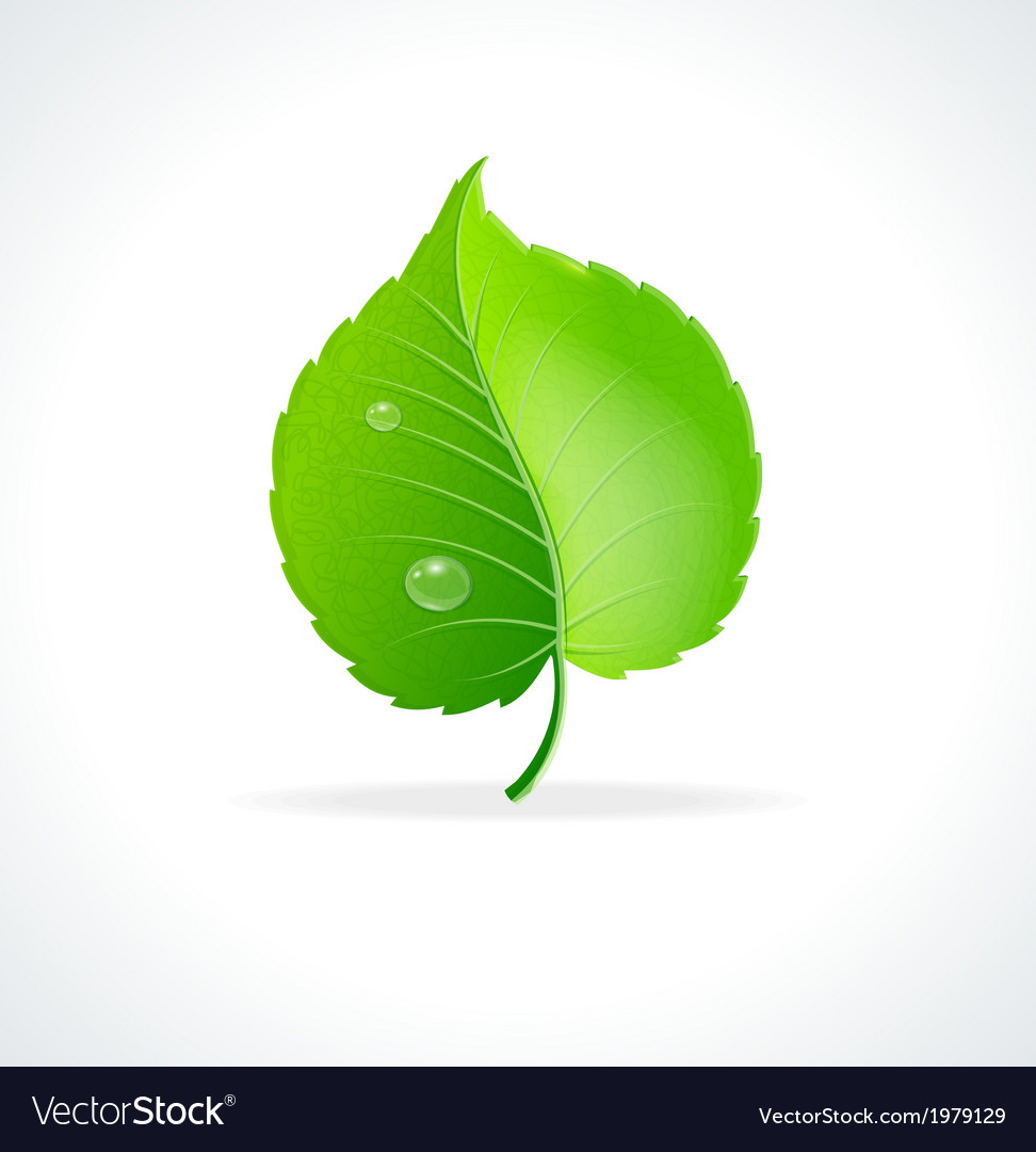 Glossy green detailed leaf vector
