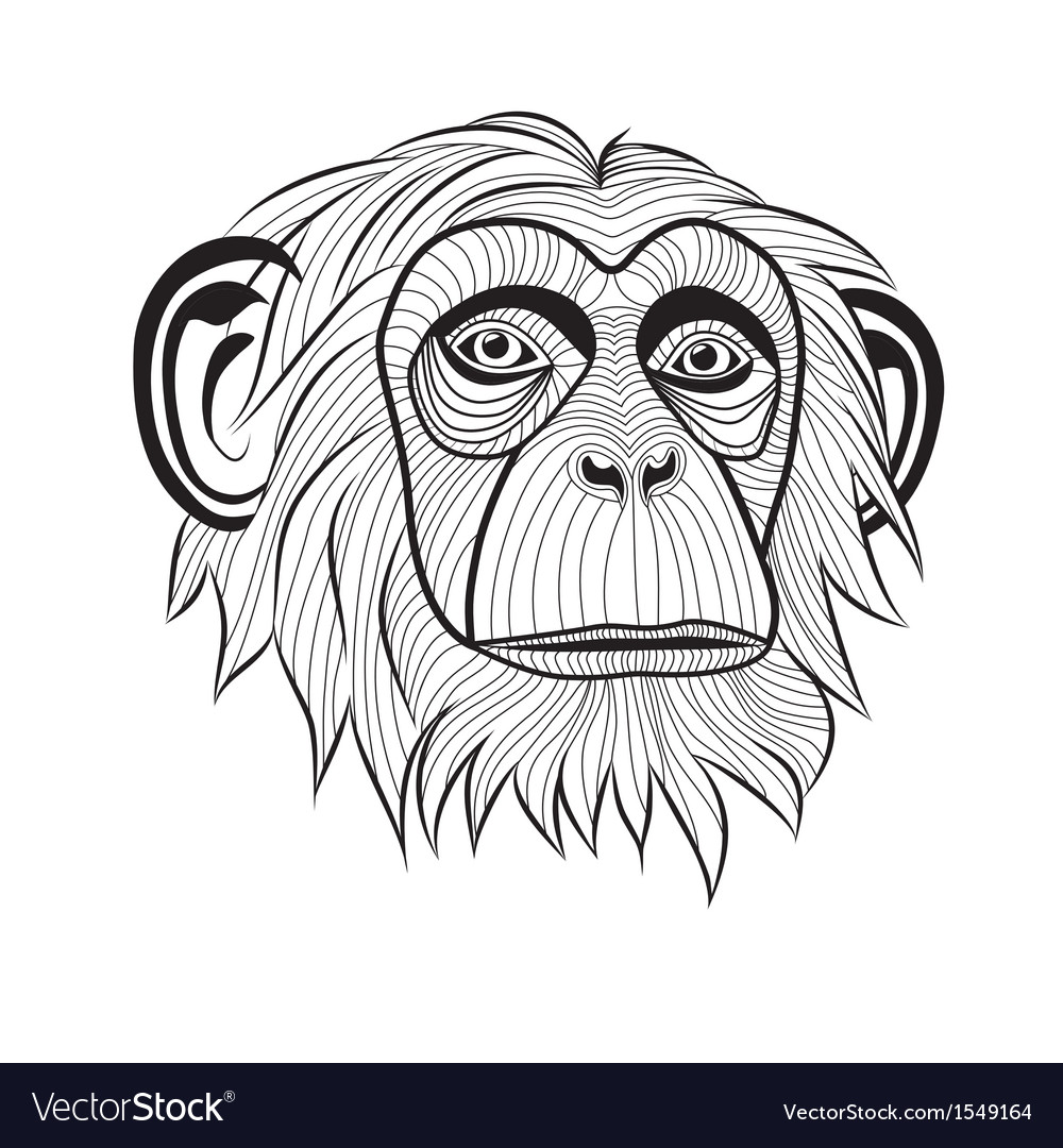 Monkey chimpanzee ape head animal vector
