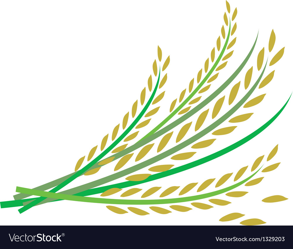 Rice design vector