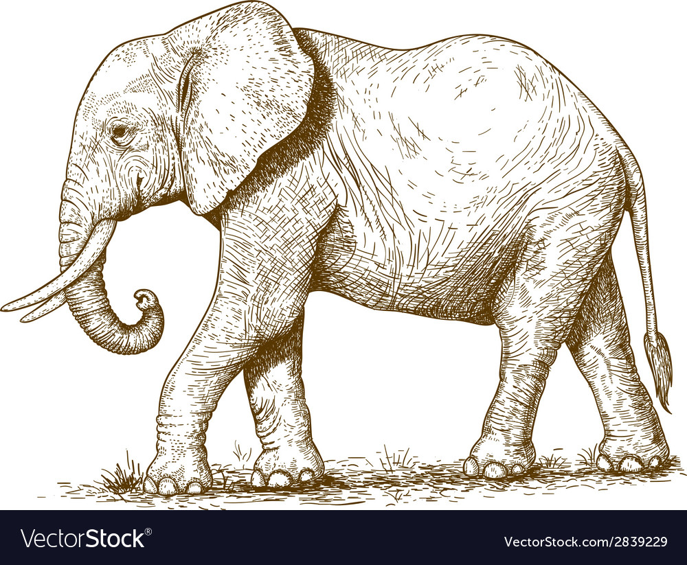 Engraving elephant vector